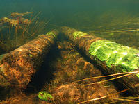 (6) Sunken logs are common evidence from logging period times