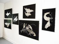 (3) Gallery Exhibit North Atlantic Species