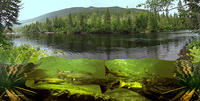 (6) Berry Mountain Salmon Pool on the Grand Cascapedia River